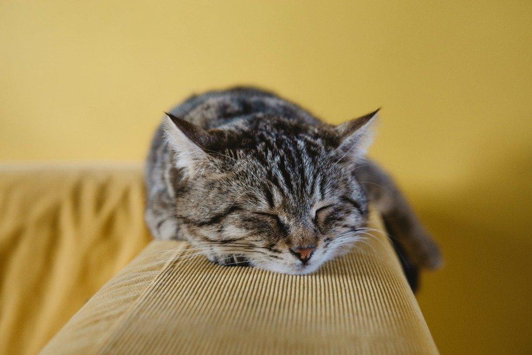 Stop all'ansia nel mondo animale con Hibbertia e la lavanda