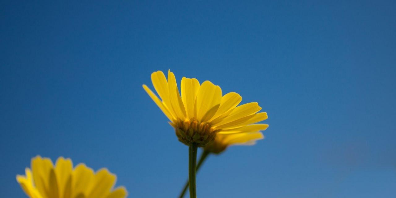 Floriterapia: ritrovare leggerezza e serenità interiore