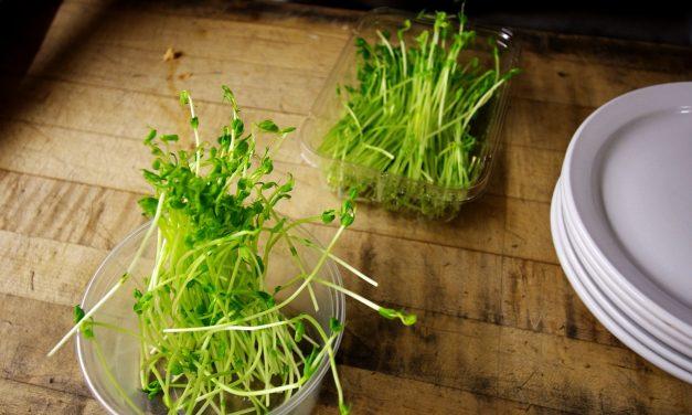 Germogli: integrazione alimentare ottimale